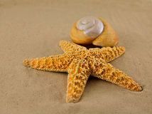 Starfish on beach. Starfish laying in the sand on the beach near the water Stock Images