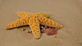 Starfish on the beach. Starfish on the beach, Summer and fun Royalty Free Stock Image