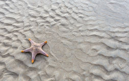 Starfish on a beach as waves Roy. Royalty Free Stock Photos