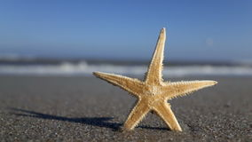 Starfish with beach in the background Stock Image