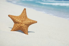 Starfish on beach with blue ocean and waves Royalty Free Stock Images