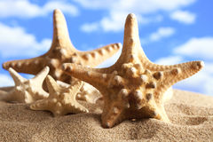 Starfish on beach and blue sky background Stock Photo