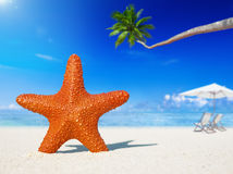 Starfish Beach Coconut Tree Summer Vacation Concept Stock Photo