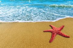 Starfish on the beach copyspace. Starfish on the beach copy space royalty free stock photo