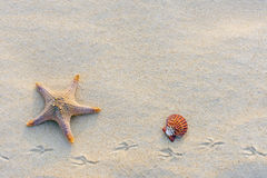 Starfish on the beach at dusk. Royalty Free Stock Photo