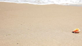 Starfish on the beach stock footage