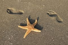 Starfish and Beach Footprints Royalty Free Stock Photography