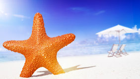 Starfish on the beach Freedom Tropical Concept Royalty Free Stock Photo
