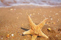 Starfish on the Beach in front of wave covered with foam, shot with copyspace Royalty Free Stock Image