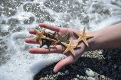 Starfish. At the beach, in hand Stock Image