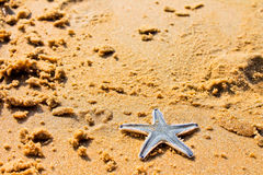 Starfish. Beach of the Indian ocean, GOA Stock Image