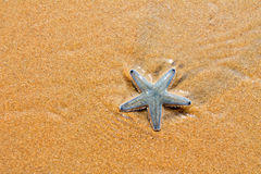 Starfish. Beach of the Indian ocean, GOA Stock Photo
