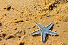 Starfish. Beach of the Indian ocean, GOA Stock Photos