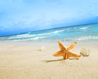 The starfish on the beach. royalty free stock image