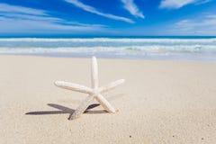 Starfish on the beach Stock Photo