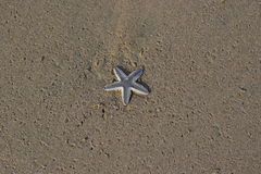 Starfish on beach. Look what the sea has brought ashore! A starfish is a curiosity thing for all humans. It symbolizes the amazing beauty of the marine world Royalty Free Stock Image