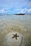 Starfish at the beach Stock Photo