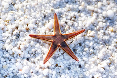 Starfish on beach with natural white marble stones Royalty Free Stock Image
