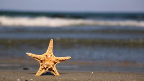 Starfish on the beach stock video