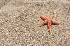Starfish on the beach. Orange Starfish on the sand at Acapulco Royalty Free Stock Image