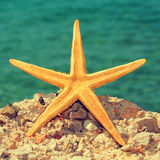 Starfish on the beach Royalty Free Stock Images