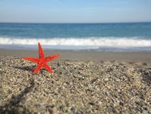 Starfish beach Royalty Free Stock Image