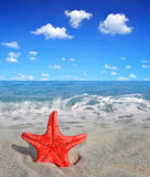 Starfish on beach Stock Images