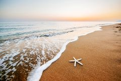 Starfish on the beach. Romantic composition Royalty Free Stock Photo
