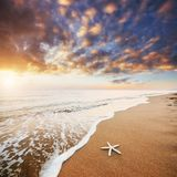 Starfish on the beach. Romantic composition Royalty Free Stock Image