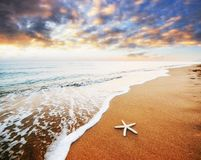 Starfish on the beach. Romantic composition Stock Images