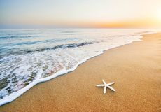 Starfish on the beach. Romantic composition Stock Photos