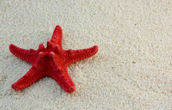 Starfish on beach sand. Red star fish on beach sand Backgrounds Stock Photos
