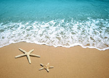 Starfish on a beach sand. Two starfish on a beach sand