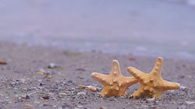 Starfish on the Beach stock video footage