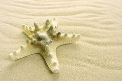 Starfish on the beach Stock Photo