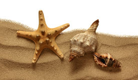 Starfish on Beach Sand Royalty Free Stock Photos