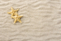 Starfish in the beach sand with copy or text space. Starfish or Sea stars shells in the beach sand with copy or text space royalty free stock images