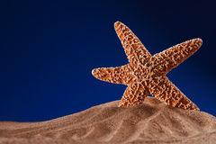 Starfish on a beach sand with dark blue background Royalty Free Stock Photos