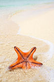Starfish on a beach sand. Royalty Free Stock Photos