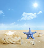 Starfish on the beach on sand Stock Image