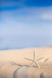 Starfish on a beach sand Stock Photography