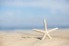 Starfish on a beach sand Stock Images