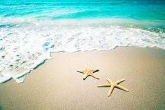 Starfish on a beach sand. Vintage retro style Stock Image