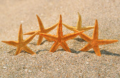 Starfish on the beach sand Stock Photos