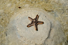 Starfish on a beach Stock Photography