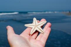 Starfish Stock Images