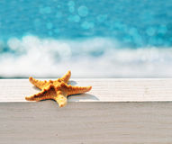 Starfish. On the beach and sea stock image