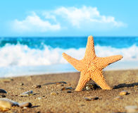 Starfish. On the beach and sea stock photo