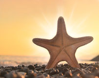 Starfish. On the beach and sea stock photography