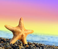 Starfish. On the beach and sea royalty free stock image